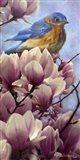 Bluebird Magnolias
