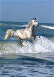 Dapple Sea
