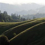 Rolling Fog and Rolling Hills