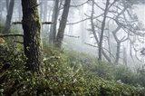Primeval Woods