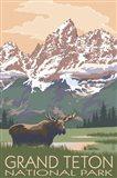 Grand Teton National Park Moose