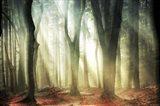 Dissolving Woods