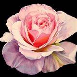1 Rose - Romantica