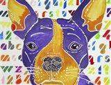 Kessel the French Bulldog