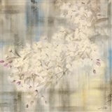 White Cherry Blossom IV