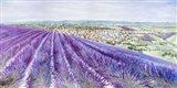 Lavender II