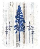 The Blue Moose - Lodge Pole Pine