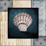Blue Sea Clam Shell 2