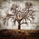 Cottonwood Tree Part 1