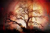 Cottonwood Tree Part 10