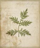 Scientific Plant 1