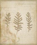 Scientific Plant 3