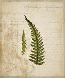 Scientific Plant 5