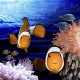 Sea Creatures Clown Fish