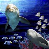 Sea Creatures Dolphines