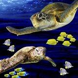 Sea Creatures Turtle