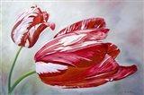 English Tulips