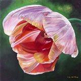Lit Tulip 2