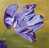 Blue Lady Virus Tulip