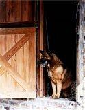 Red Dog's Barn