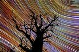 Woomalai Stars 1