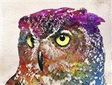 Owl Drowing