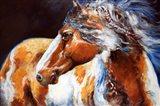 Mohican Indian War Horse