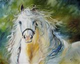 White Cloud The Andlusian Stallion