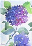 Watercolor Hortensia 1