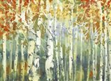 Abstract Birch Trees Warm