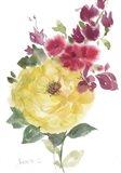 Roses Bogonvilia 2