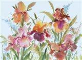 Loose Irises