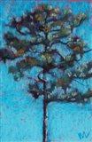 Tall Pine, Blue Sky, Julington Durbin Preserve Series