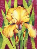 Yellow Iris W/ Maroon Back