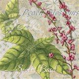 Herbs 4 Basil