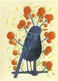 Blackbird Oranges