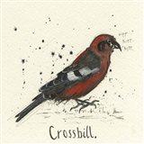 Crossbill
