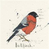 Bull Finch