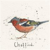 Chaf Finch