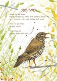 Song Thrush Postcard