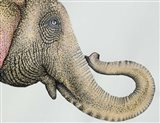 Spotted Asian Elephant 2