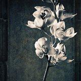 Orchids Stem Texture