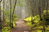 Lubec Path