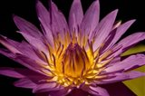 Fairchild Gardens Lily