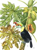 Toucan in Papaya Tree