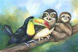Toucan Owl Sloth