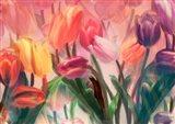 Tulip Flamenco