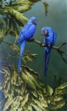 Pair of Blue Parrots