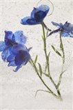 Flores en Hielo VI