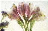 Flores en Hielo VII